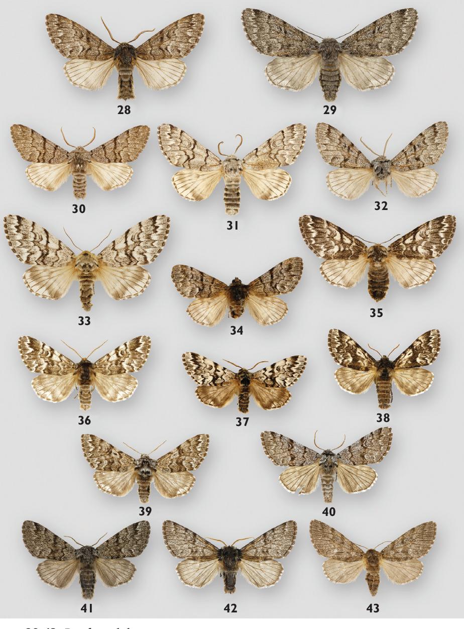 figure 28-43