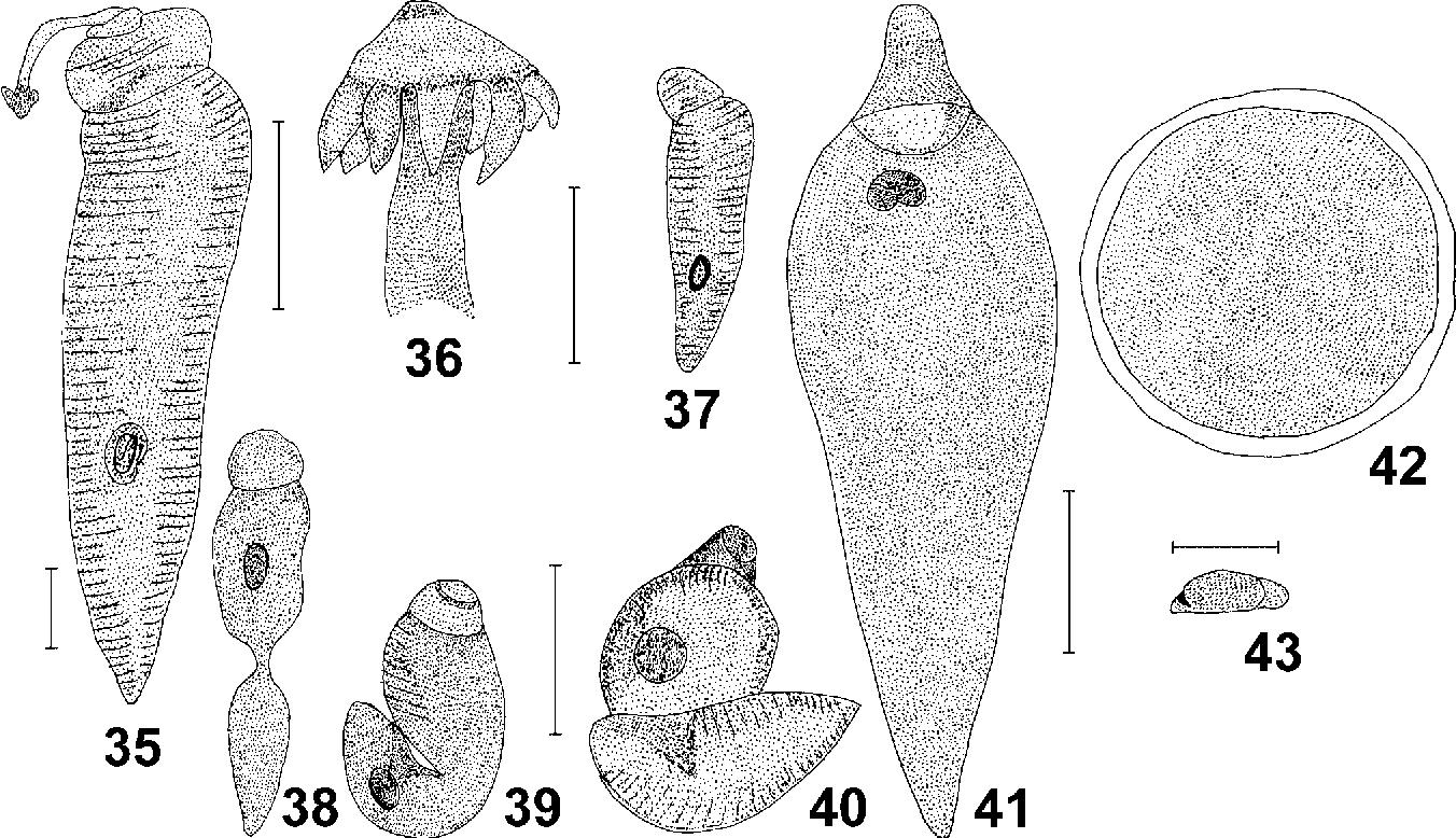 figure 35-43