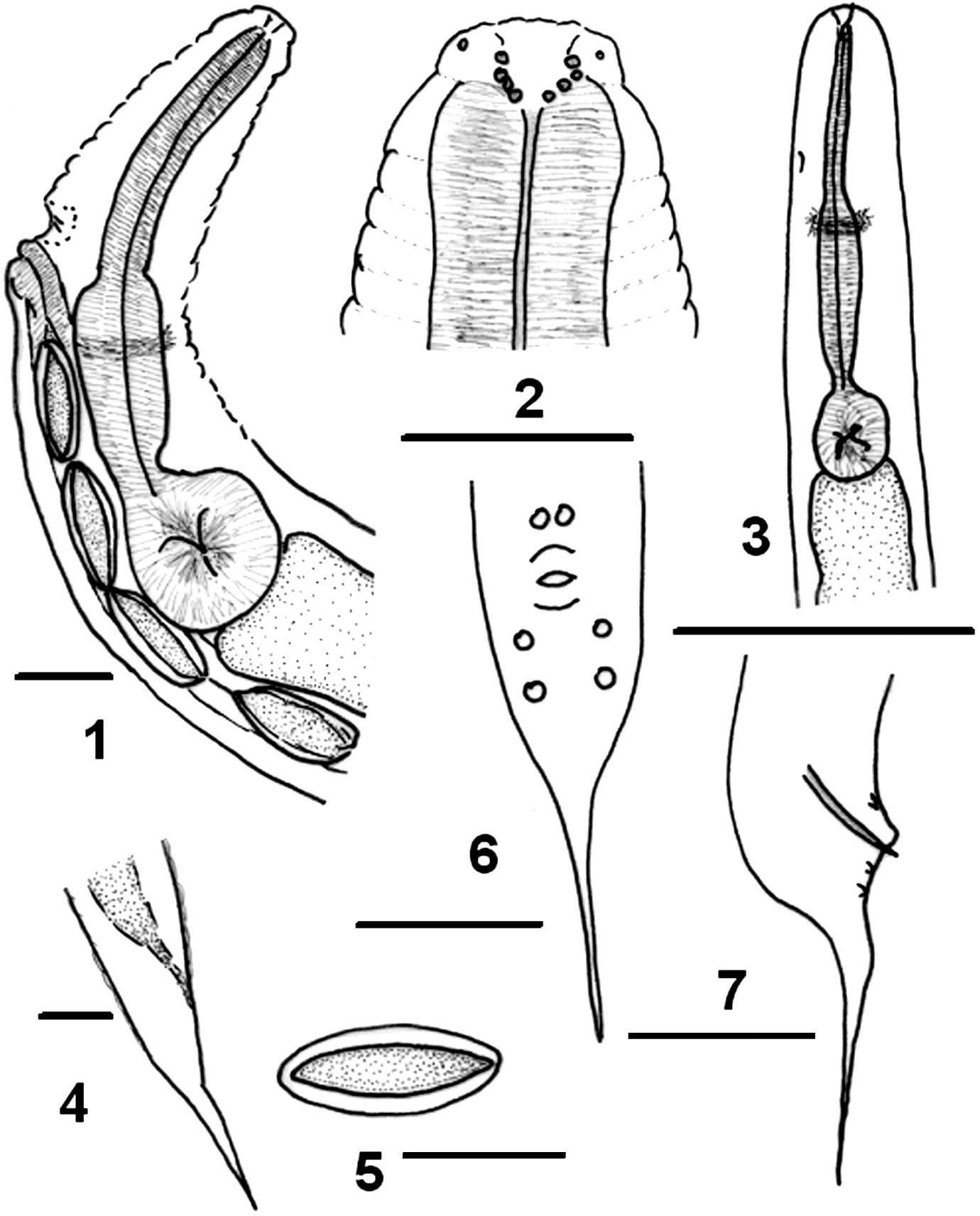 figure 1–7