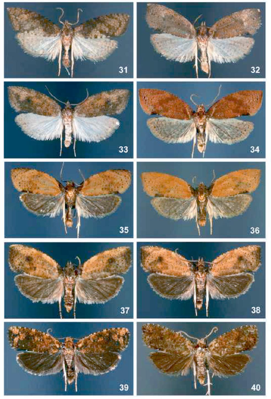 figure 31-40