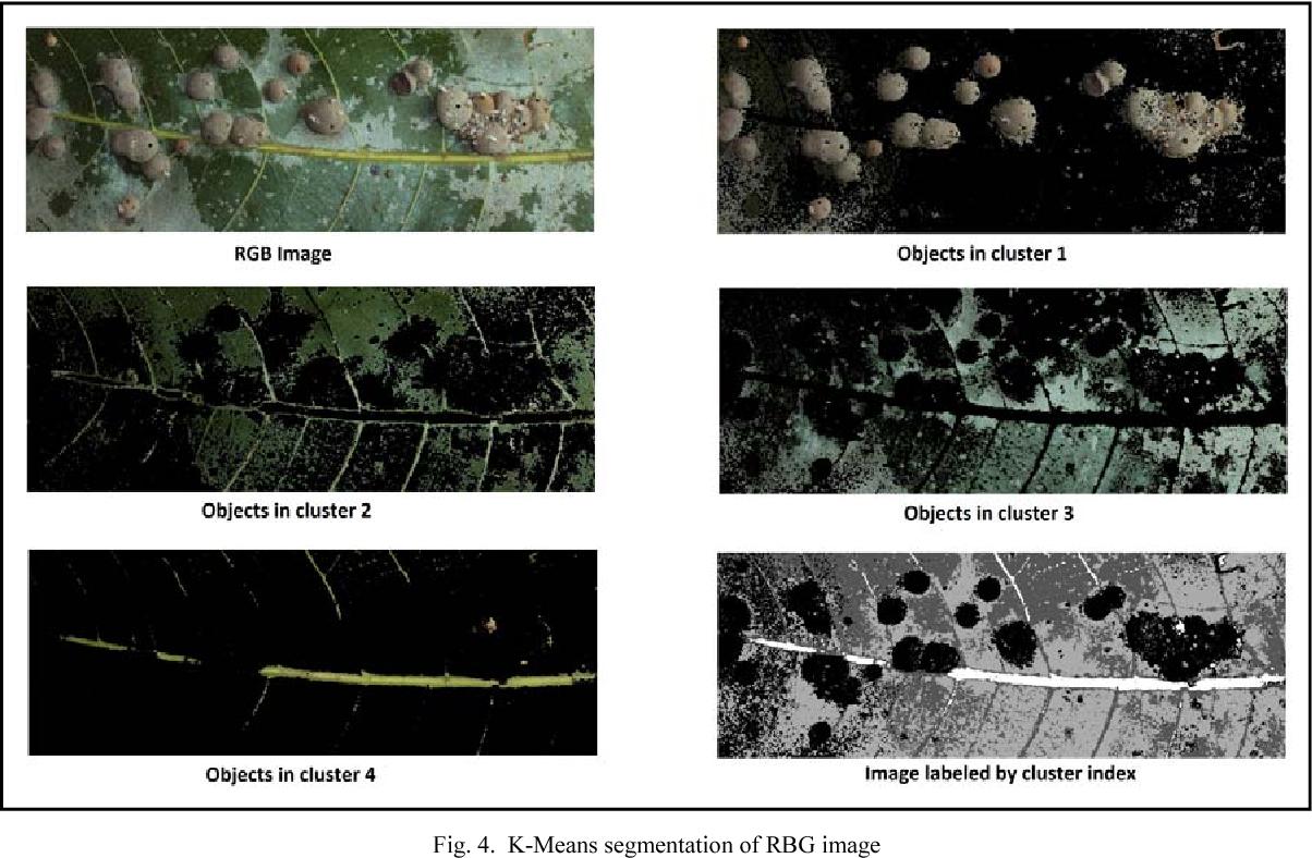 Figure 4 from OpenCV based disease identification of mango