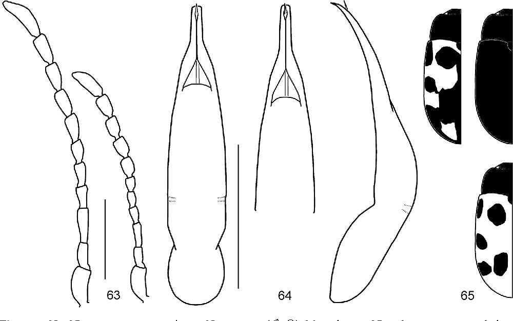 figure 63–65