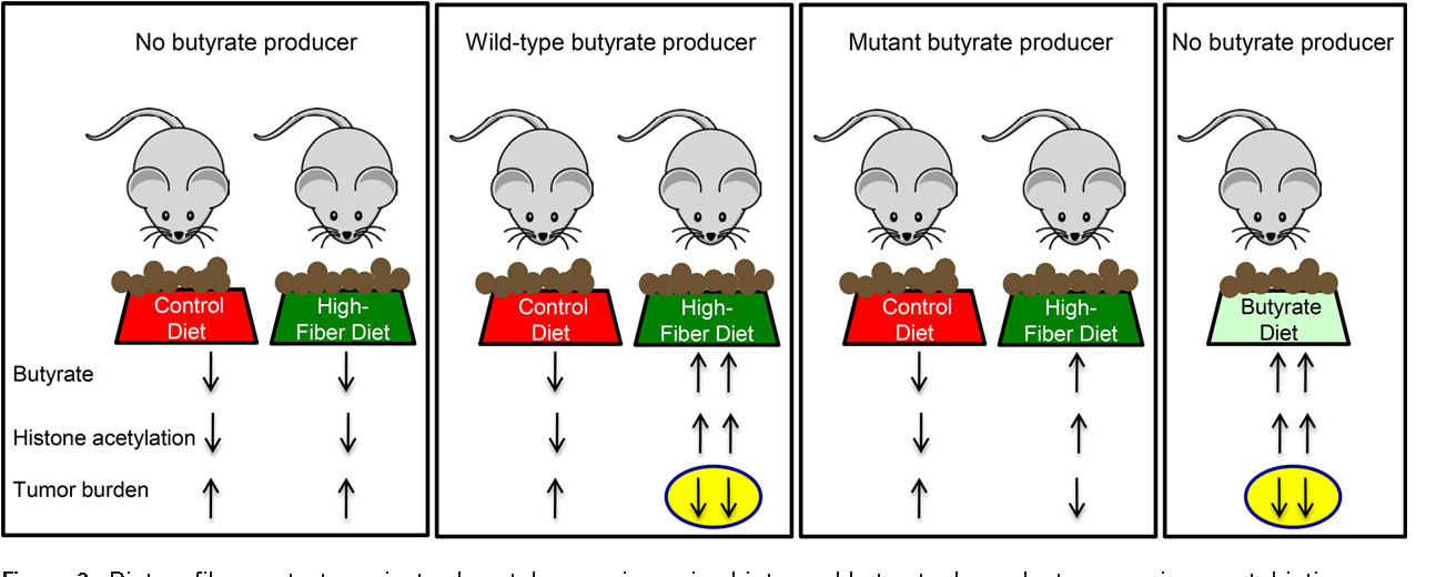 Figure 3 From Interplay Between Diet Gut Microbiota Epigenetic Events And Colorectal Cancer Semantic Scholar