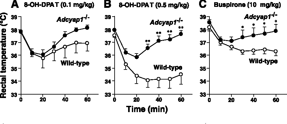 Figure 4. 5-HT1A agonist-induced hypothermia. Wild-type (open circles) and Adcyap1 / (closed circles) mice were injected intraperitoneally with 0.1 mg/kg 8-OH-DPAT (A), 0.5 mg/kg 8-OH-DPAT (B), or 10 mg/kg buspirone (C). Rectal temperature was measured at the indicated times. n 7– 8 per group. *p 0.05 and **p 0.01 versus wild-type mice. Data are expressed as means SEM.