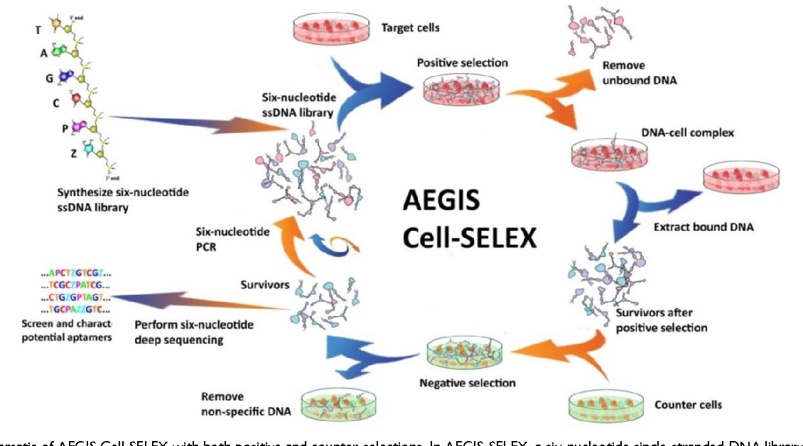 Figure 5 from Generating Cell Targeting Aptamers for