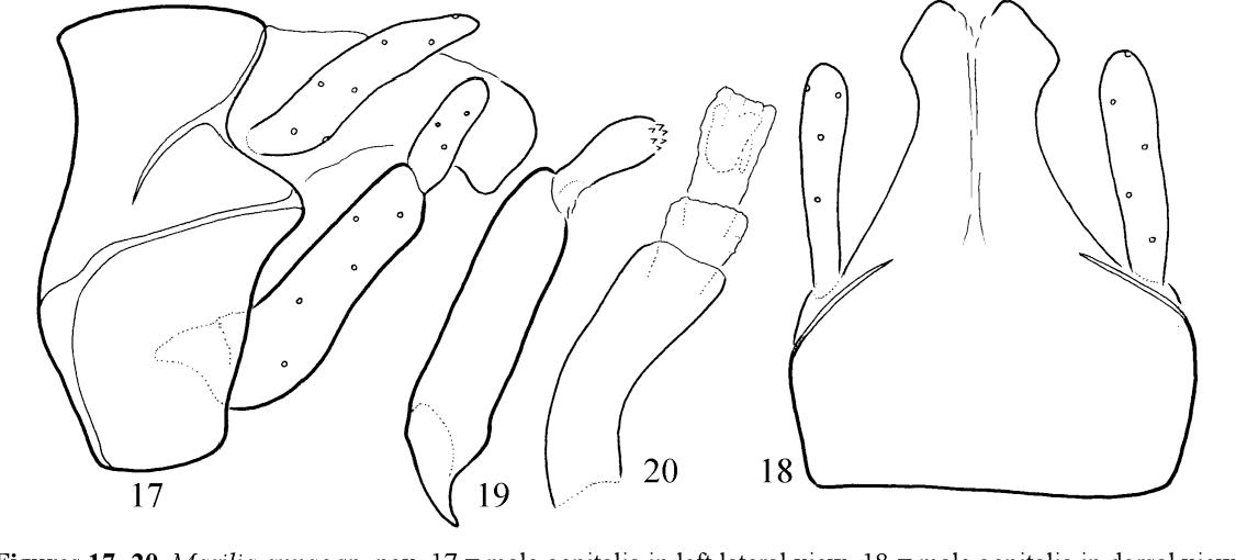 figure 17−20