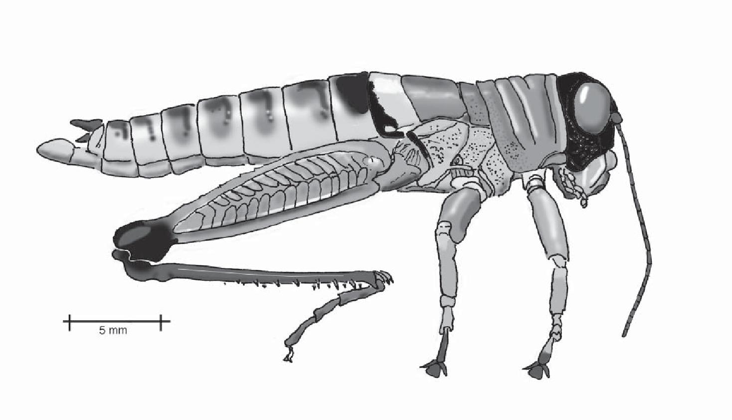 figure B16