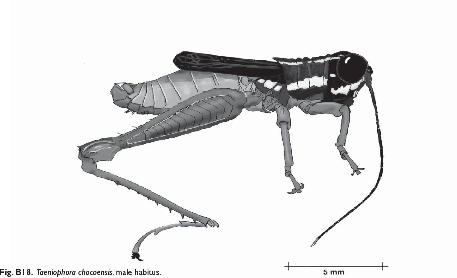figure B18