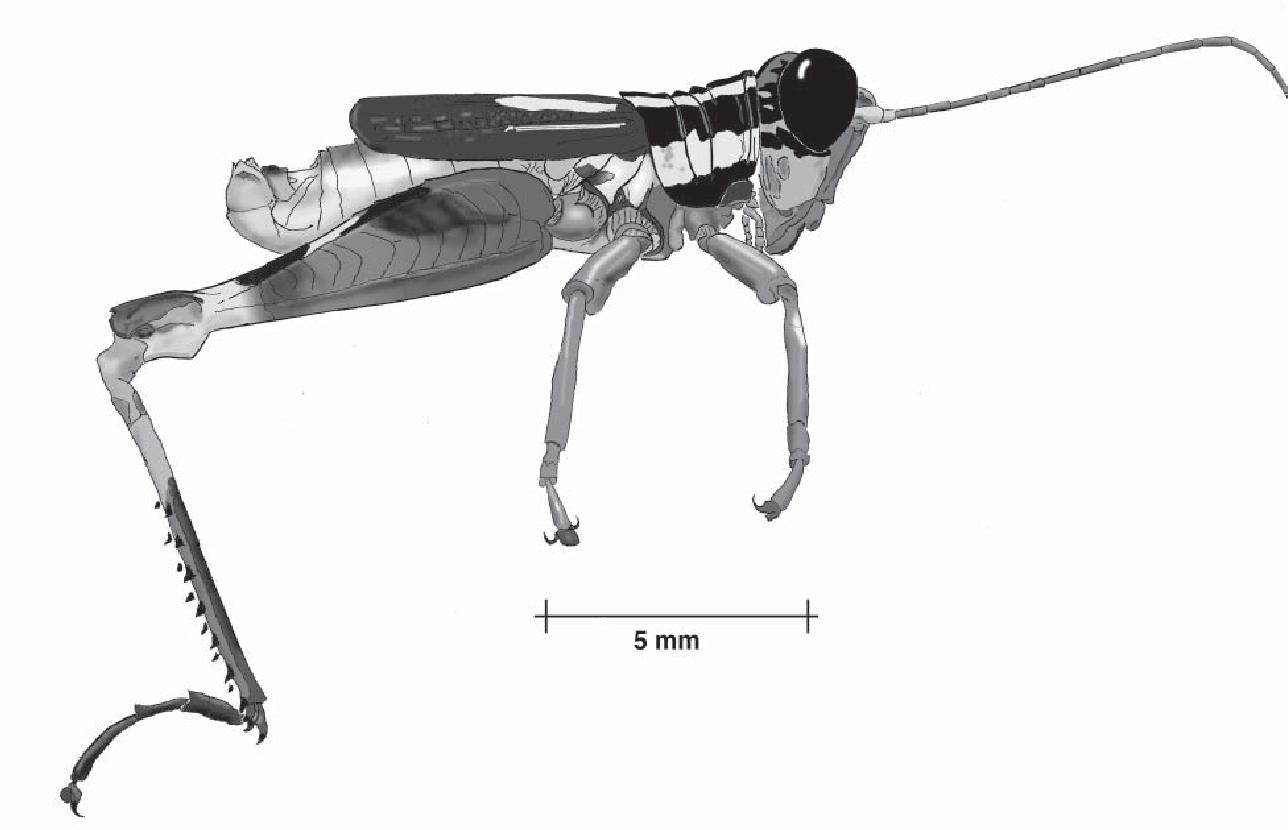 figure B19