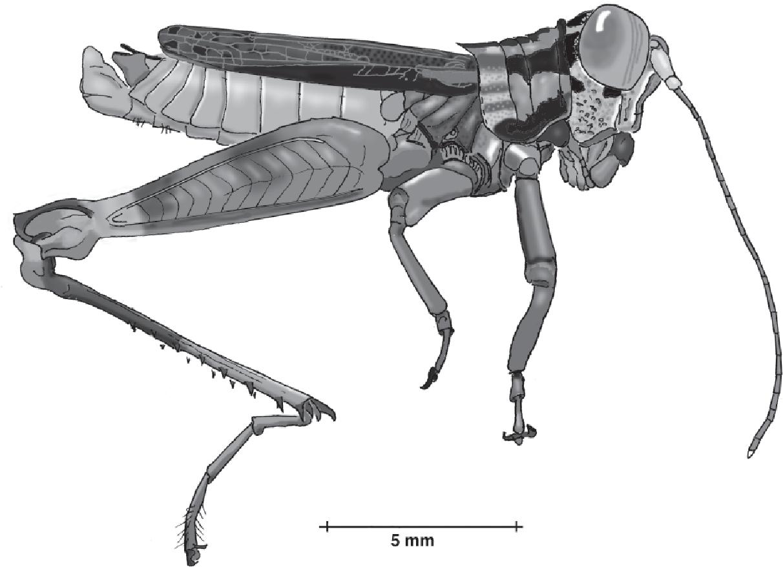 figure B22