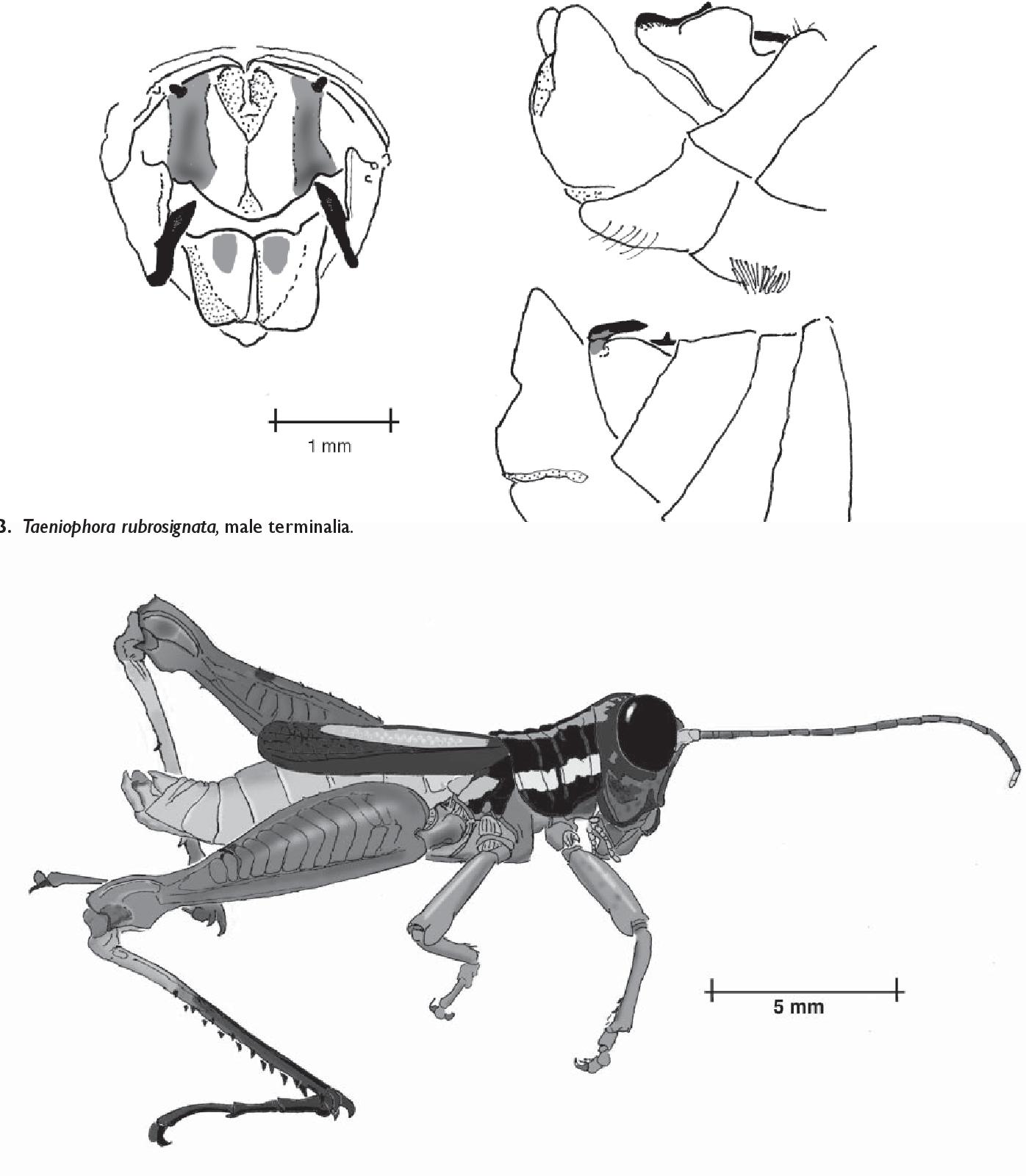 figure B23
