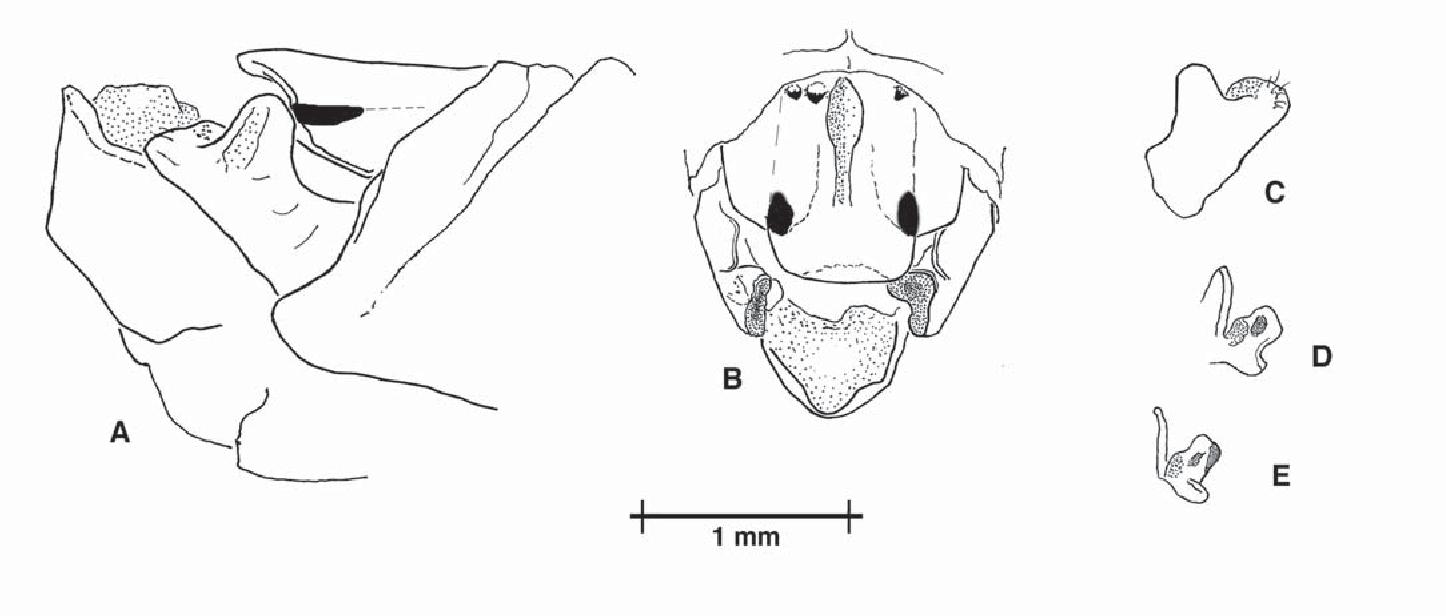 figure B25
