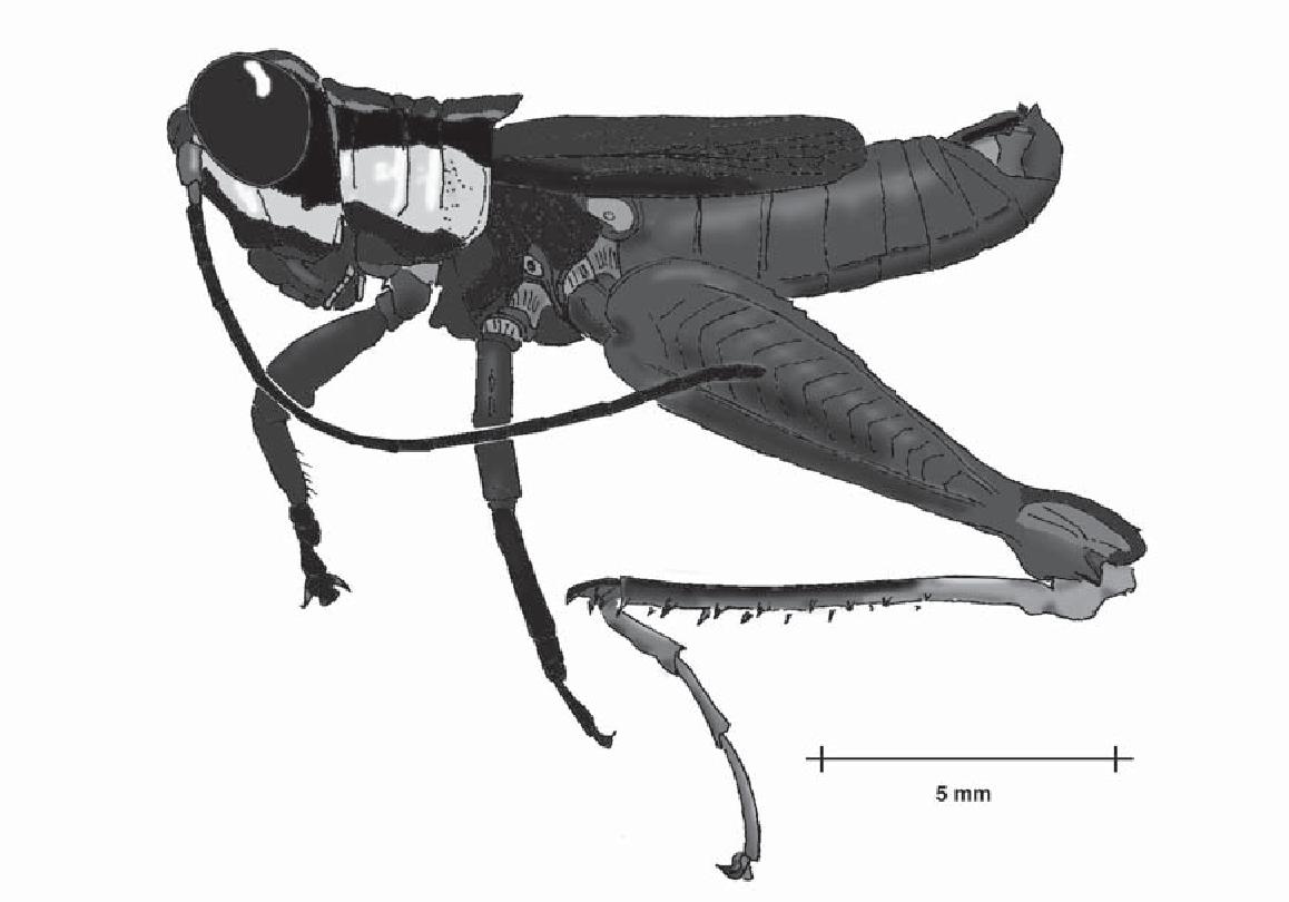 figure B26