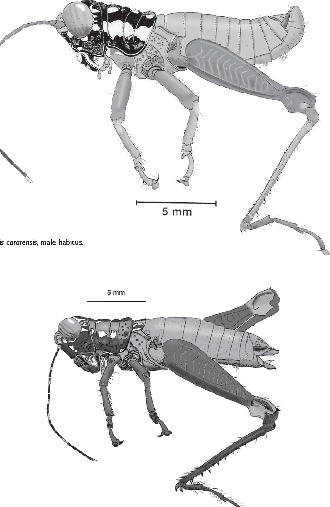 figure B37