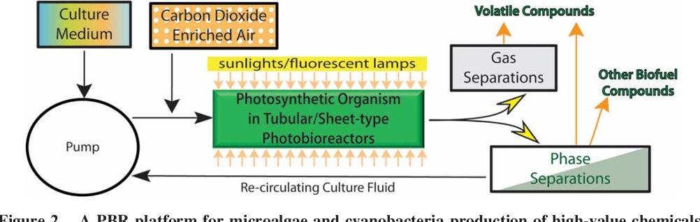 Photobioreactor Cultivation Strategies For Microalgae And Cyanobacteria Semantic Scholar