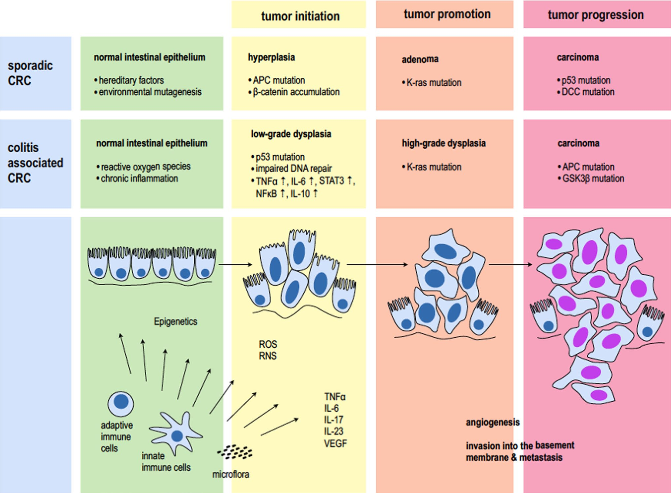 Figure 1 From Colitis Associated Neoplasia Molecular Basis And Clinical Translation Semantic Scholar