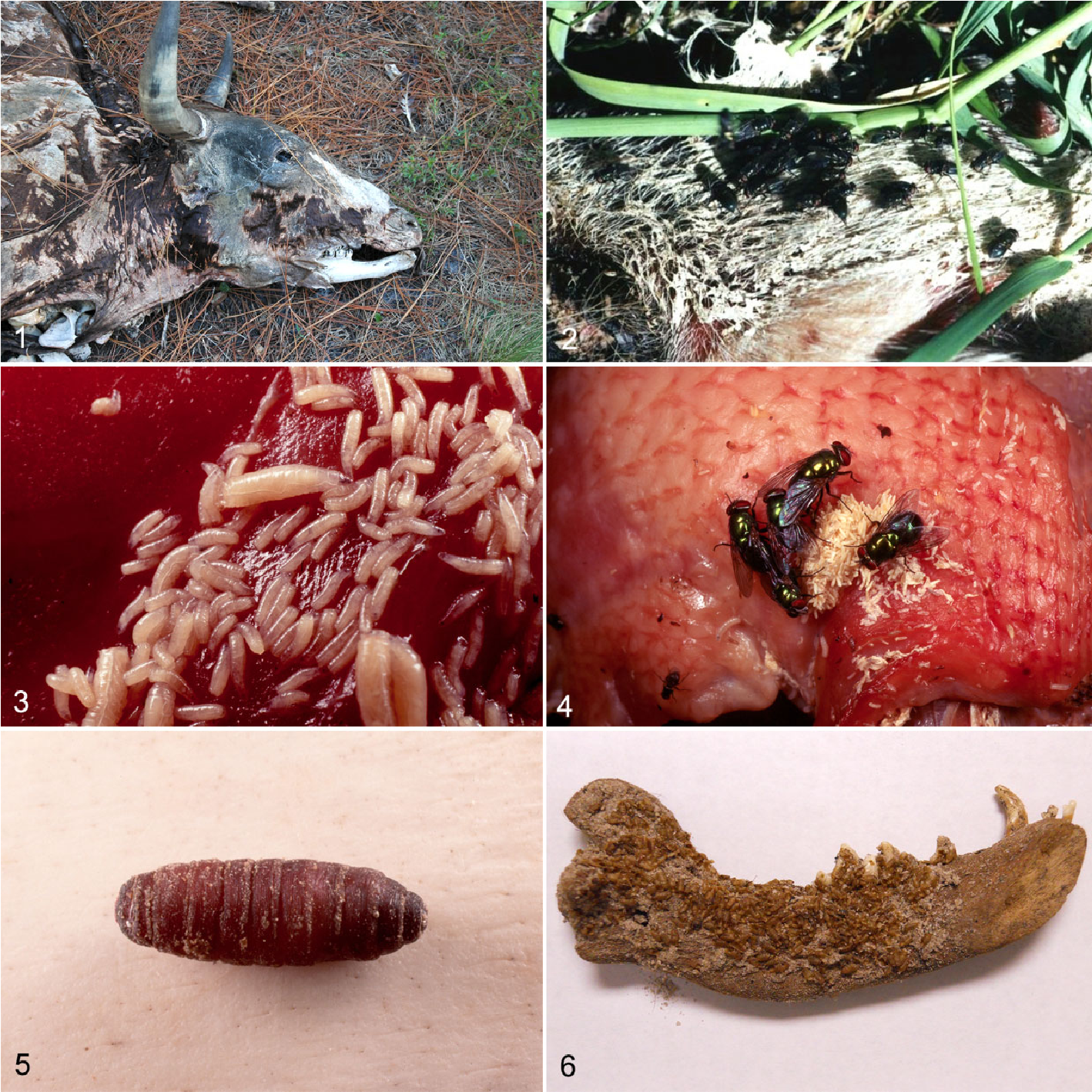 Figure 1 from Forensic Entomology in Animal Cruelty Cases