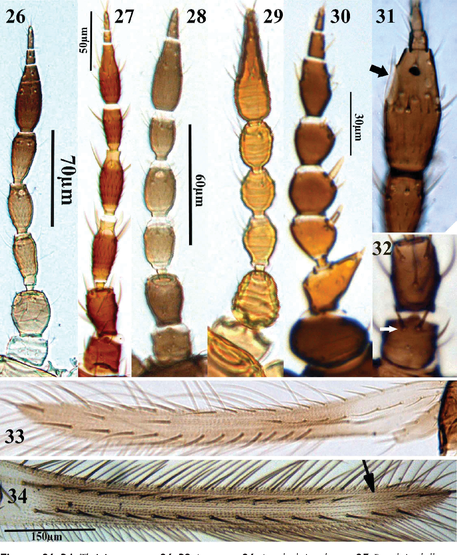 figure 26–34