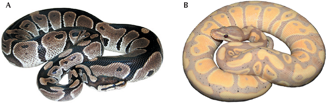 Figure 1 from A case study of sex-linkage in Python regius