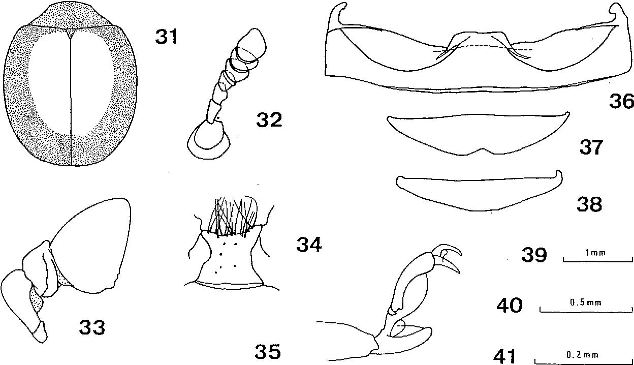 figure 31-38