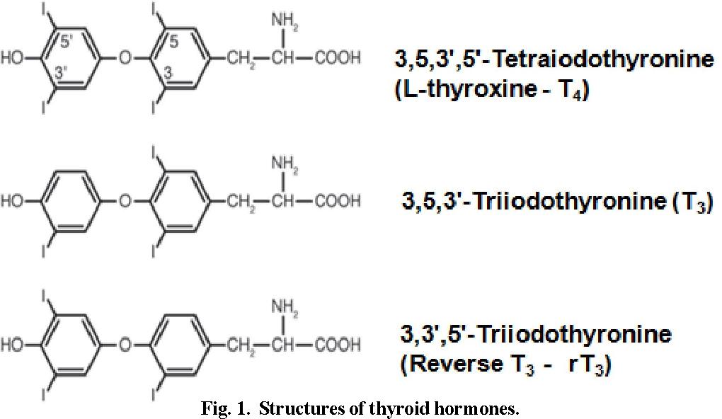 Figure 1 From An Update On Human Thyroid Hormone Receptors In