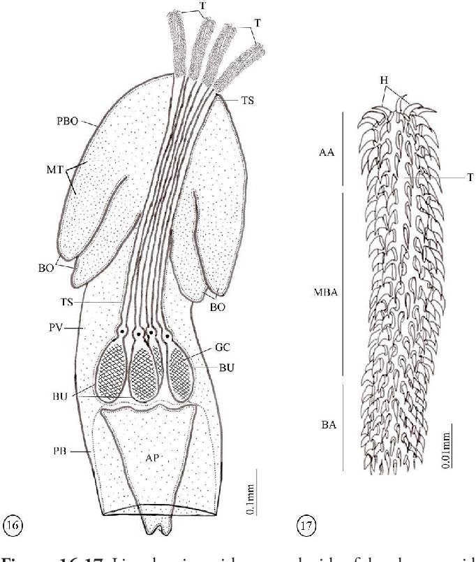 figure 16-17