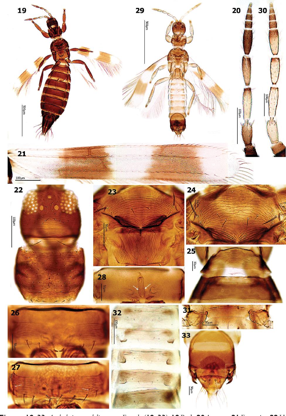 figure 19–33