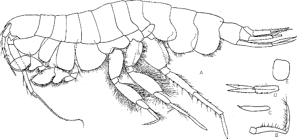 figure 60