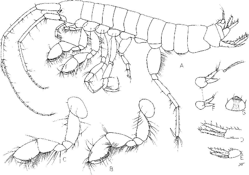 figure 80