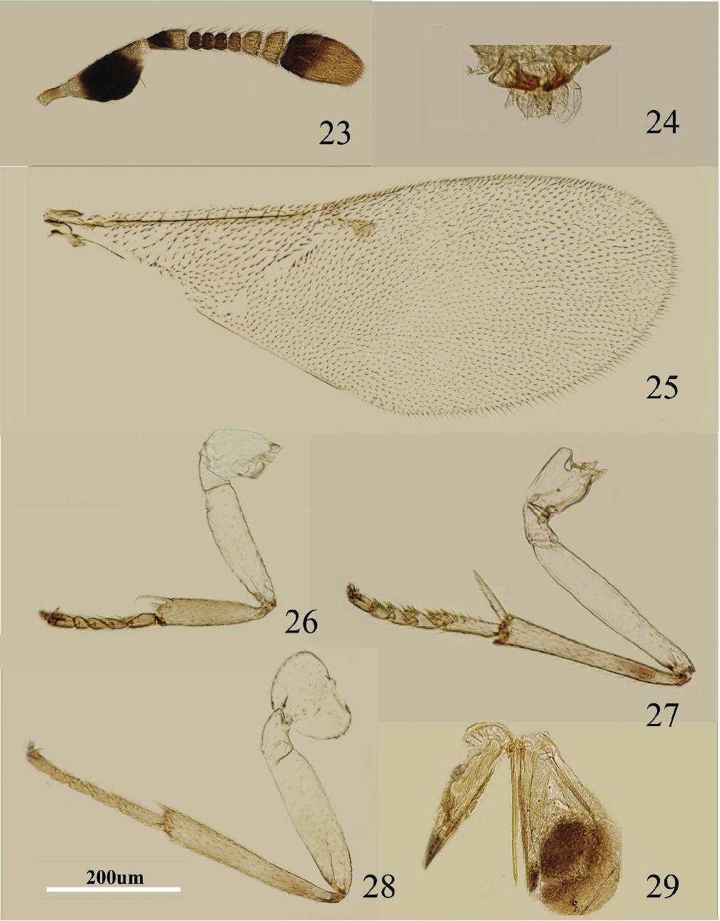 figure 23–29