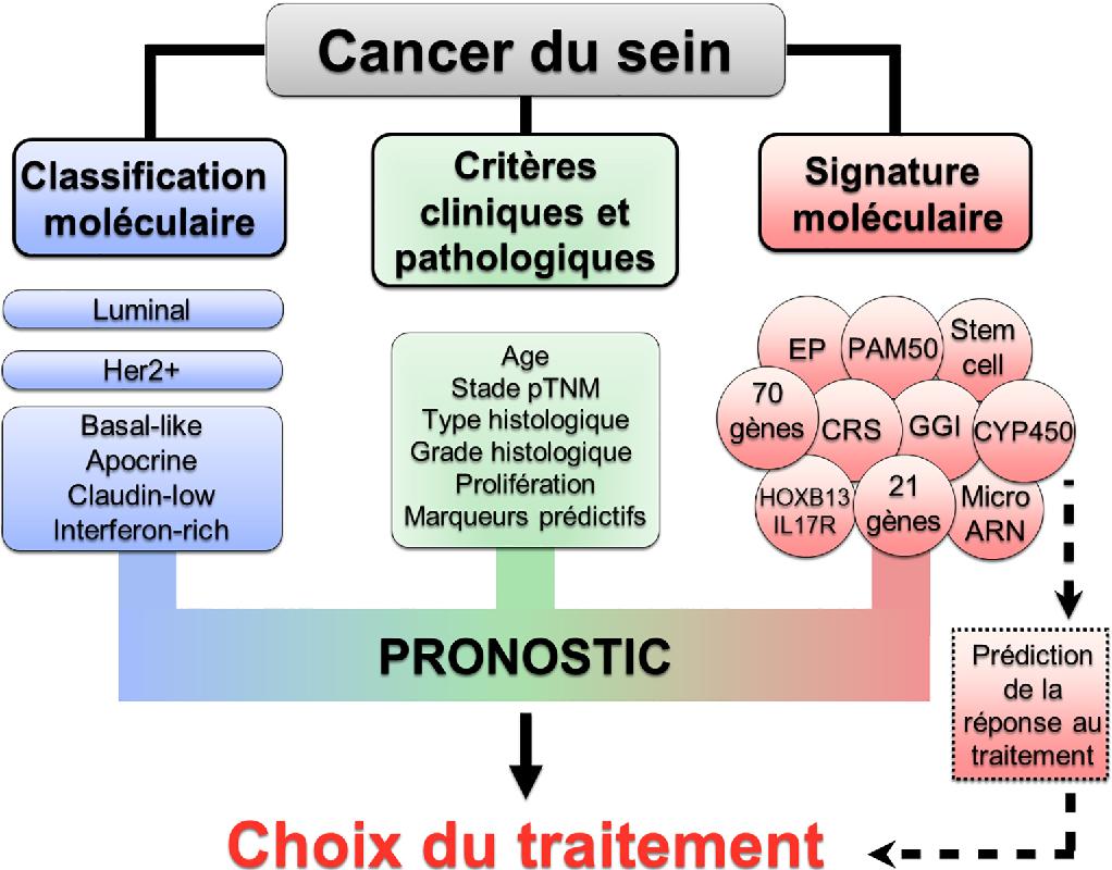 Figure 1 From Classification Et Signatures Moleculaires Des Cancers Du Sein En 2017 Semantic Scholar