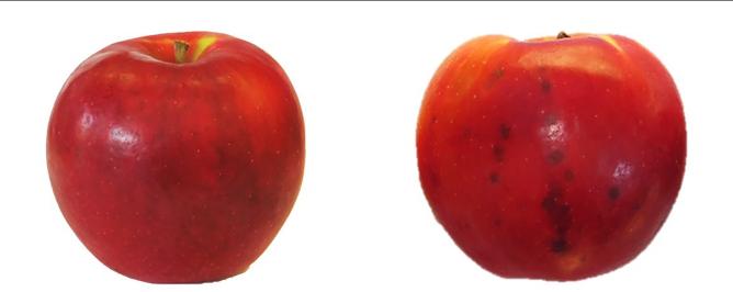 PDF] Use of Biostimulants for Organic Apple Production