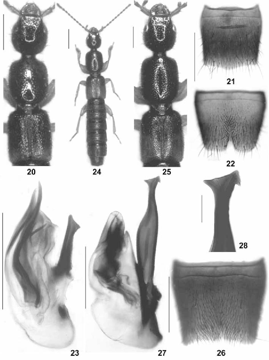 figure 20-28
