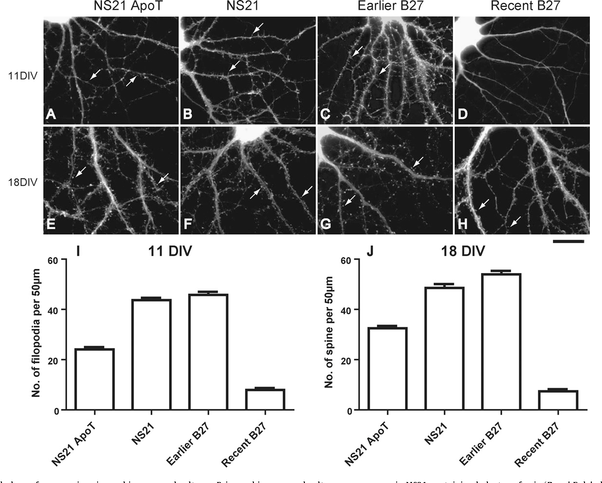 NS21: Re-defined and modified supplement B27 for neuronal
