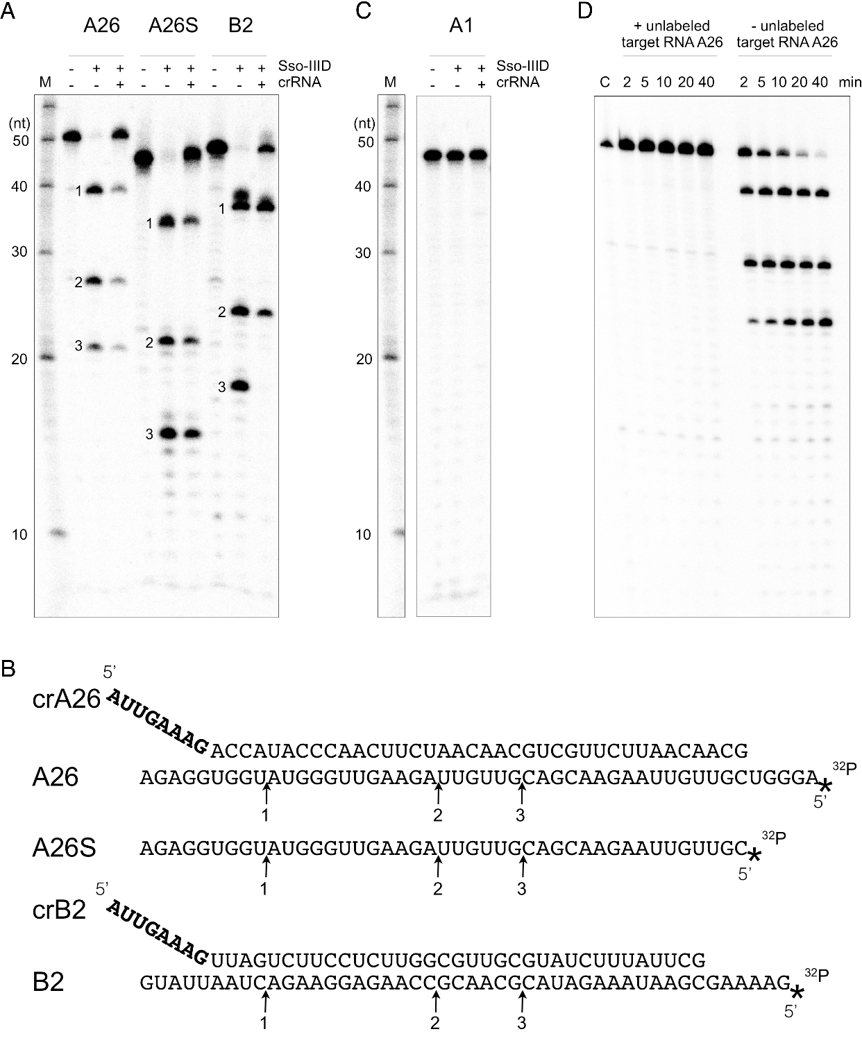 Figure 1 from Multiple nucleic acid cleavage modes in