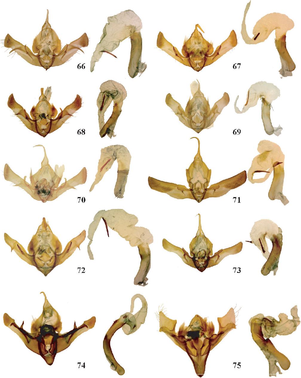 figure 66–75