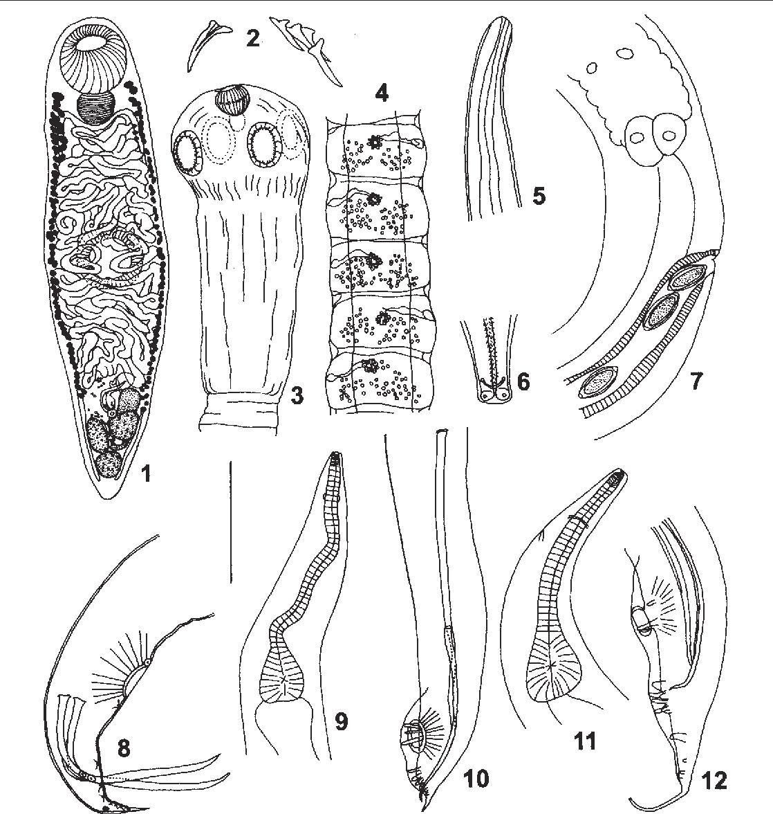 figure 1-12