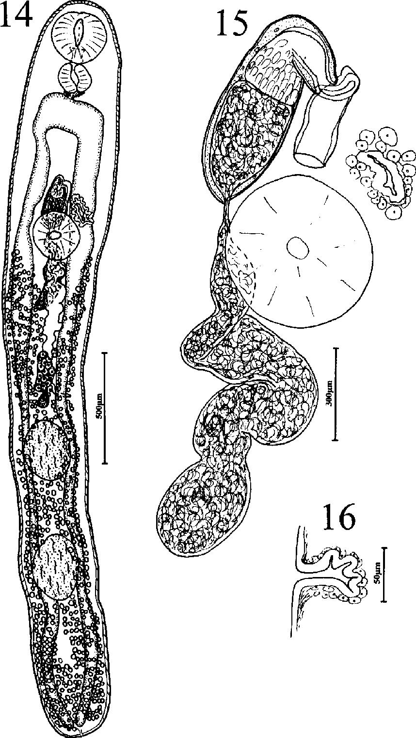 figure 14–16