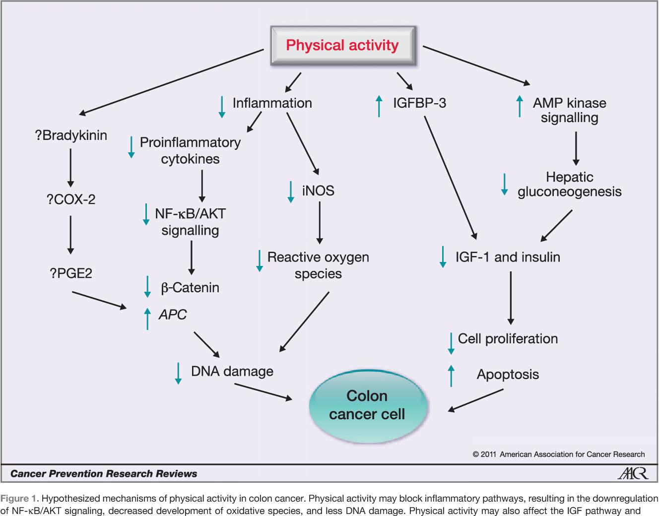 Figure 1 From Colorectal Cancer Survivorship Movement Matters Semantic Scholar