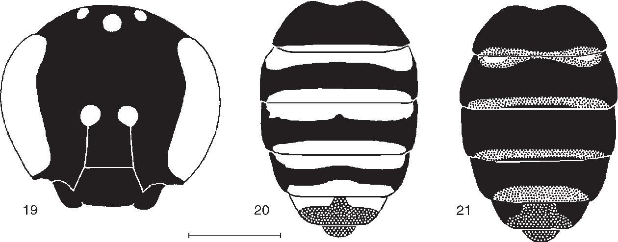 figure 19‑21