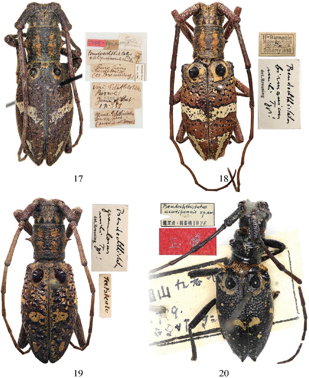 figure 17–20
