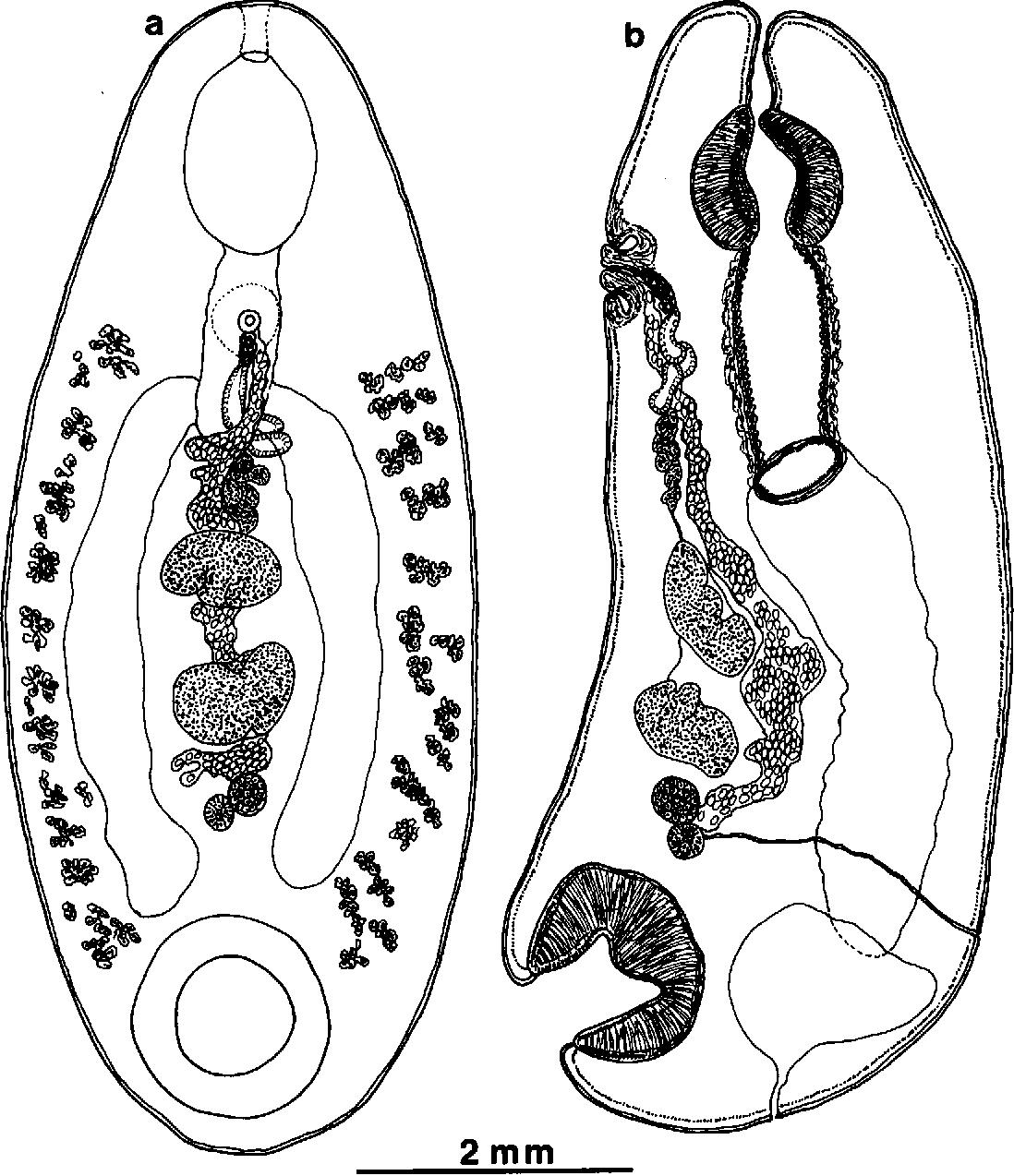 figure 137
