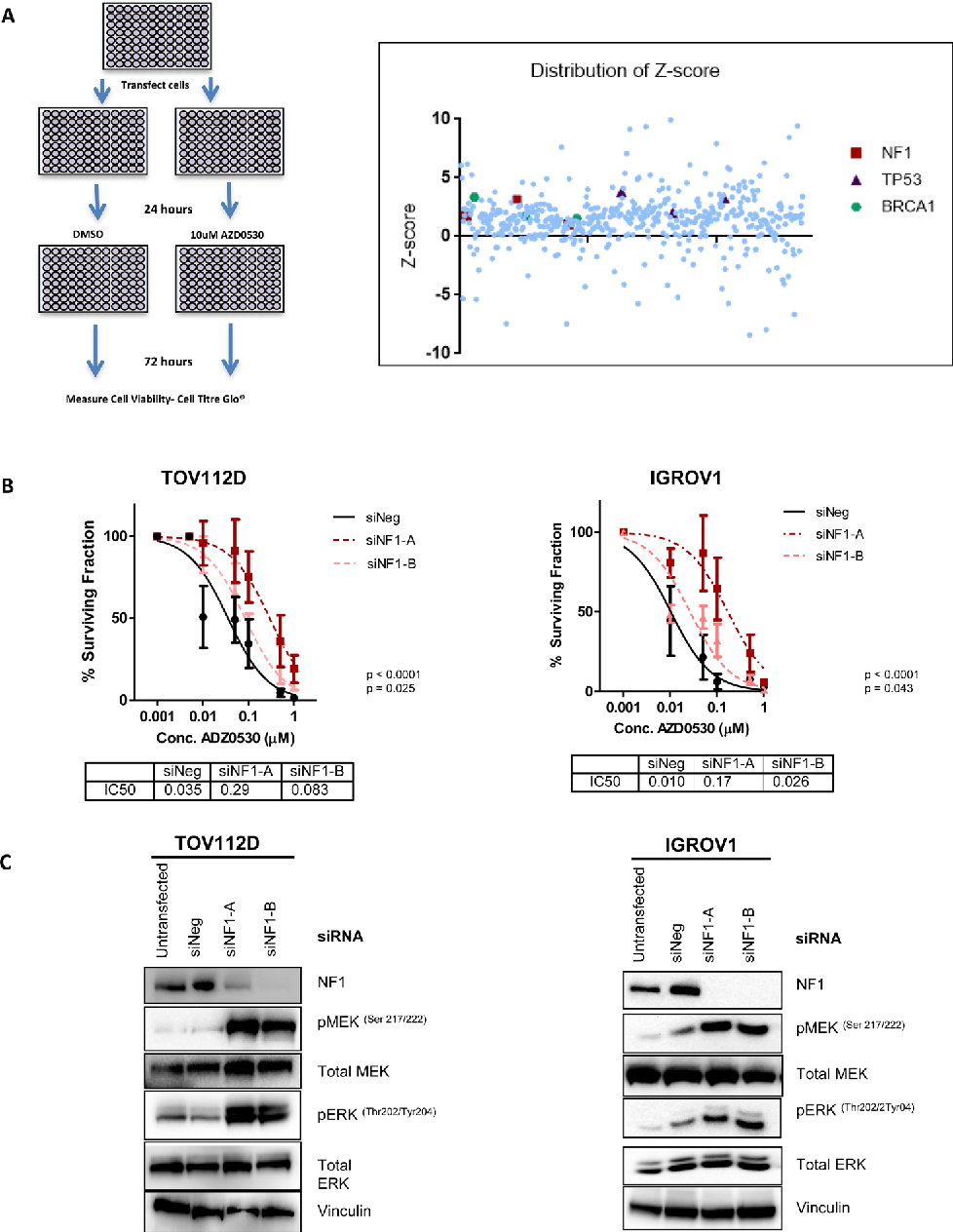 Pdf Activation Of Mapk Signalling Results In Resistance To Saracatinib Azd0530 In Ovarian Cancer Semantic Scholar