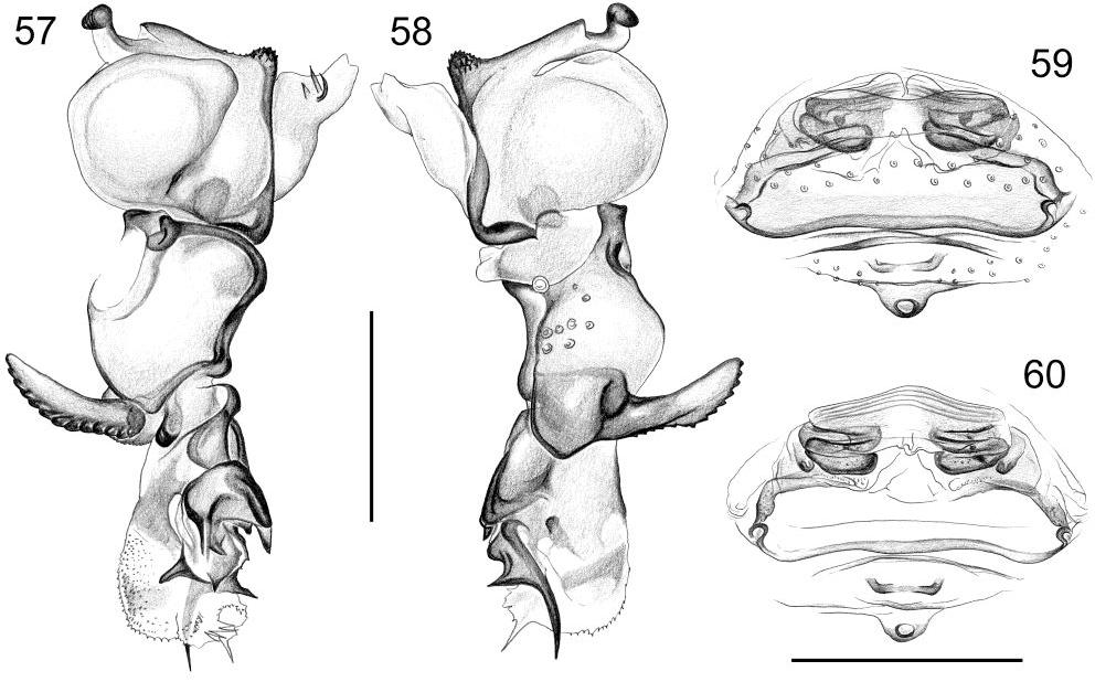 figure 57-60