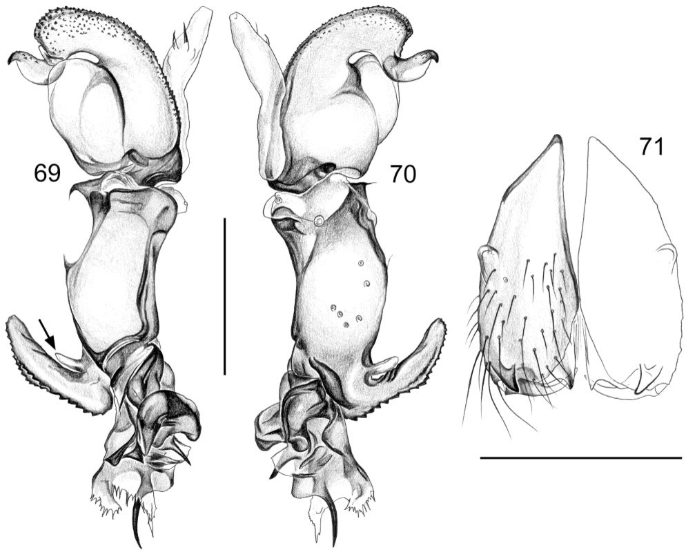 figure 69-71