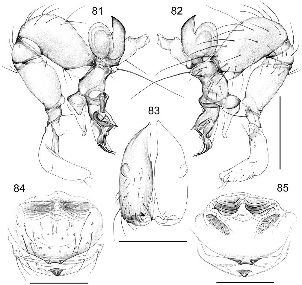 figure 81-85