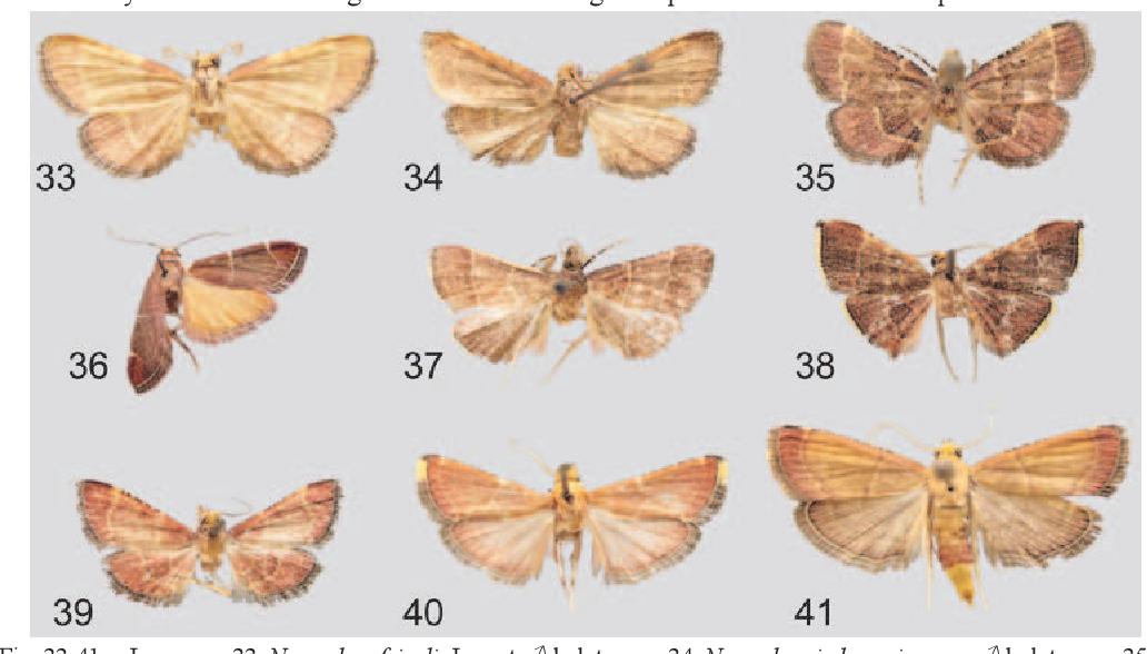 figure 33-41