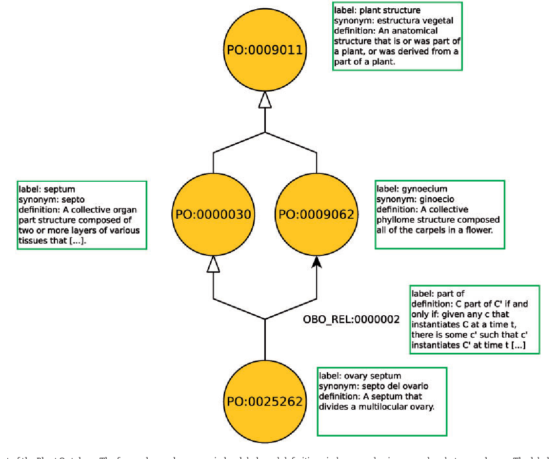 Pdf The Role Of Ontologies In Biological And Biomedical