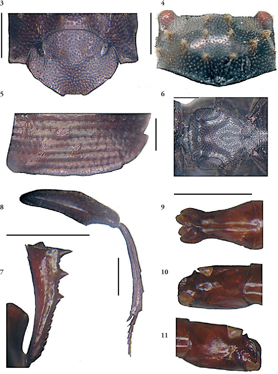 figure 3–11