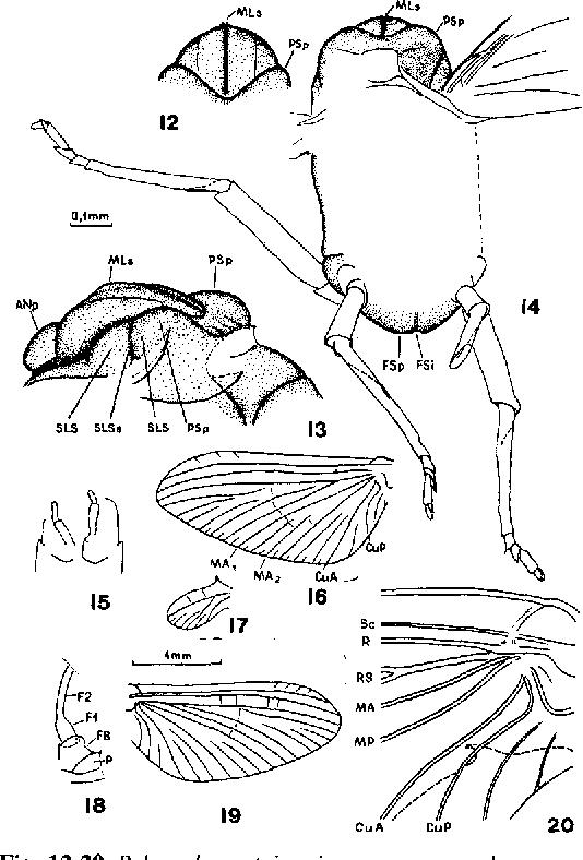 figure 12-20